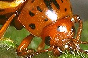 средство от колорадских жуков