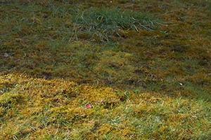 на грядках появился мох