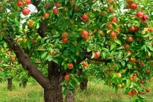 Опрыскивание деревьев — как и когда стоит это делать?