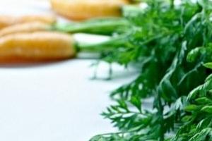 почернела ботва у моркови