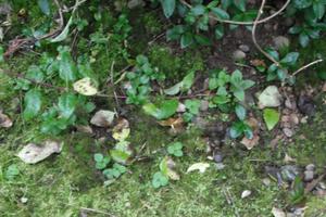 появился мох на грядках