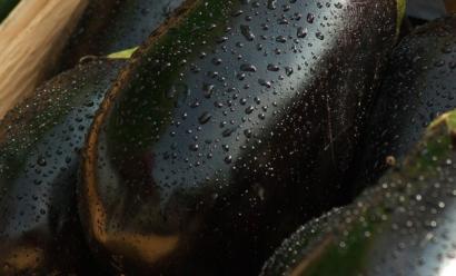 Белый налет на листьях баклажана — как избавиться от симптома?