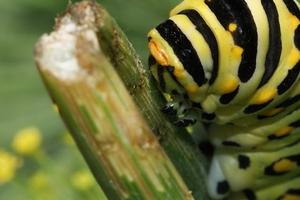 гусеницы едят смородину терапия