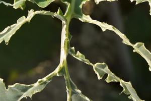 на листьях огурцов дырки